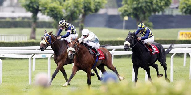 Bild eines Pferderennens