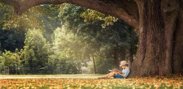 Gedichte lesen unter einem Baum - Baumgedichte