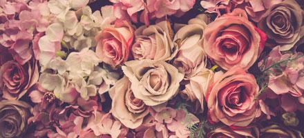 Bild von vielen Rosen für Rosengedichte