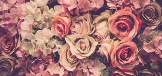 Bild von vielen Rosen