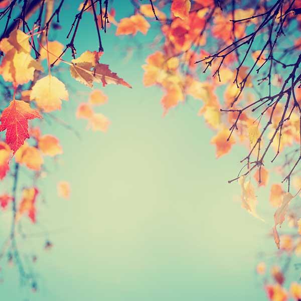 Bild zeigt Blätter im Herbst