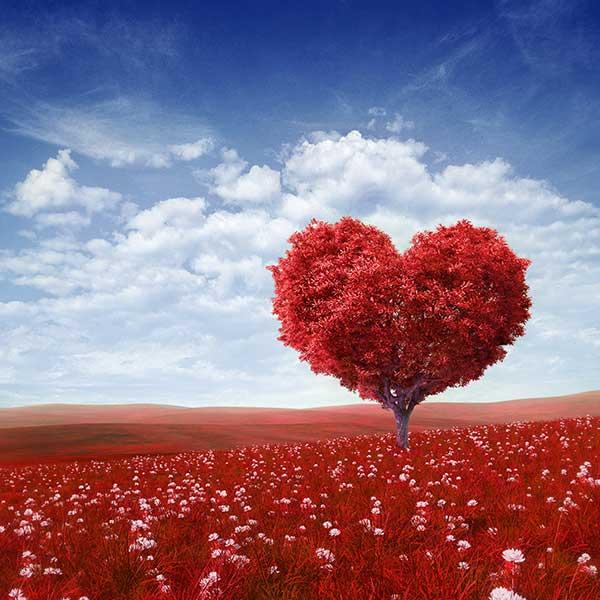 Bild von einem Herz der Liebe