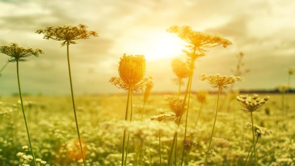 Bild von Natur am morgen