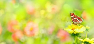 Bild eines Schmetterlings auf Blume