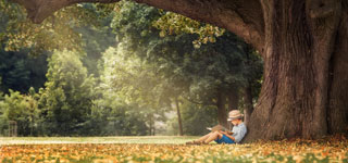 Gedichte lesen unter einem Baum