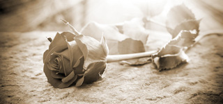 Bild einer schwarzen Rose