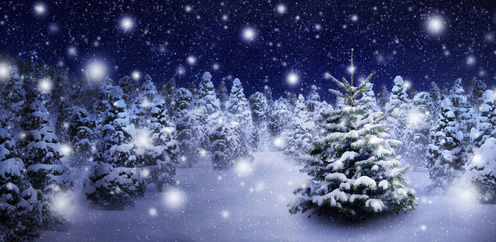 Weihnachtlicher Wald mit Schnee und Tannenbäumen