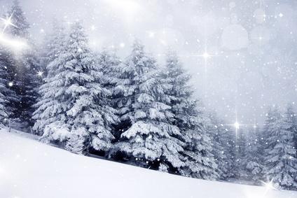 Bild von Tannen im Winter